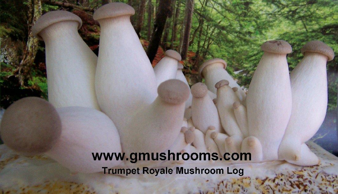 Indoor Mushroom Garden Mushroomm garden indoor mushroom growing kits trumpet royale mushroom log workwithnaturefo