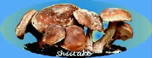 Shiitake - Mushroom Nutraceuticals