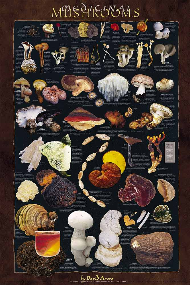 Mushroom Posters - Edible, Forest, Medicinal, Poisonous ...