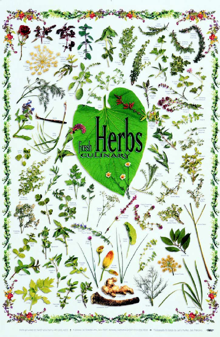 Posters - Fresh Culinary Herbs Poster