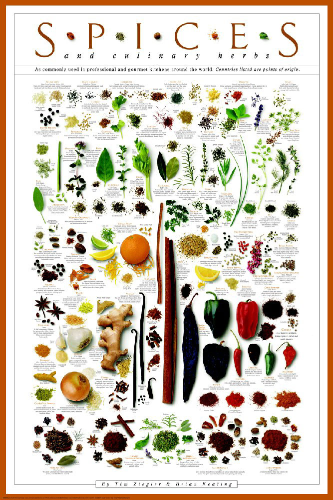 Posters - Spices and Culinary Herbs Poster