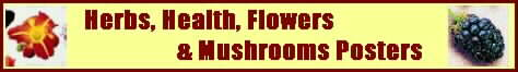 Herb, Flower, Health and Mushroom Posters