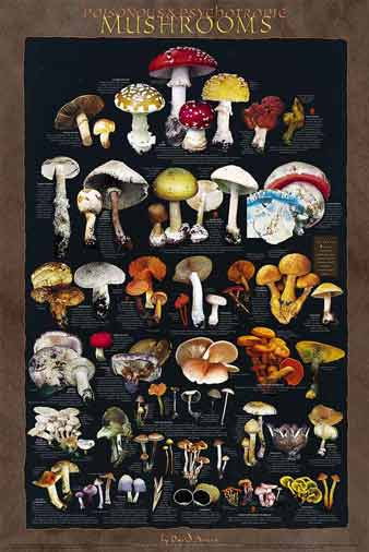 Poisonous and Psychotropic Mushrooms Poster